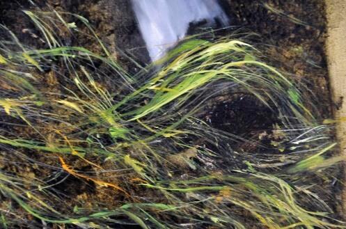 seawee-close-up