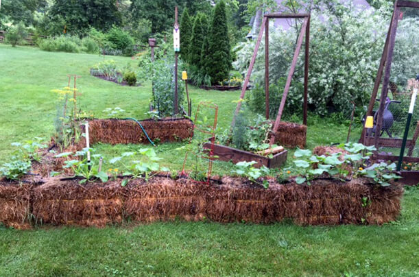 Straw Bale Gardening Archives