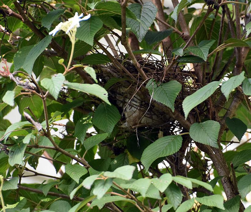 her nest