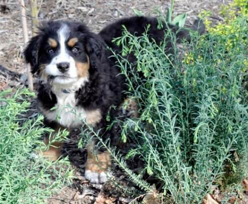 finnegan-and-the-flax